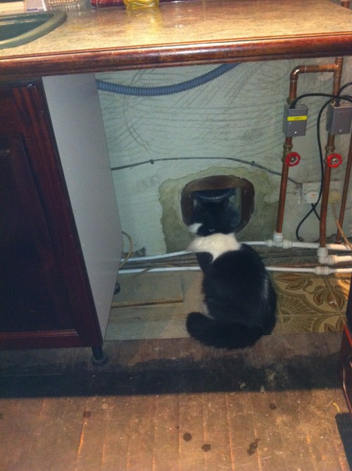 The cat tunnel