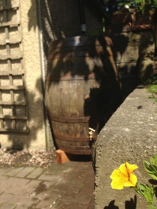 Wooden barrel water butt