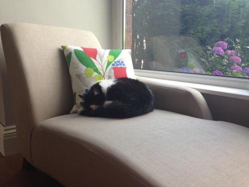 Chaise longue and Sanderson cushion