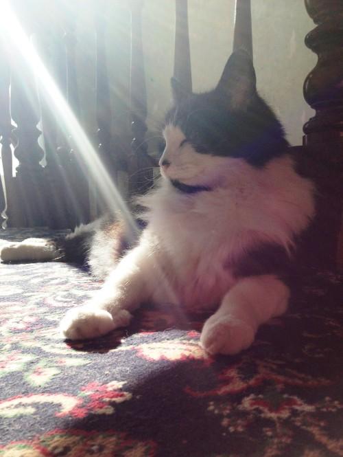 sunlightHumph